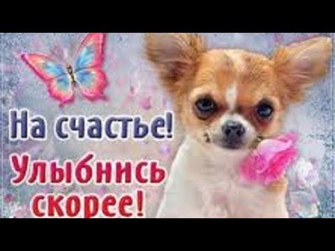 С Днём Счастья! Много счастья для тебя! Красивая песня!