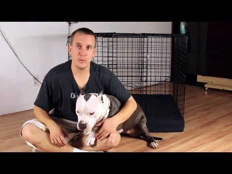How to build a cheap, DIY temporary dog crate