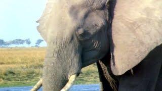 Elephants Empire 🐘- Matriarch Elephant | Elephant Documentary | Natural History Channel