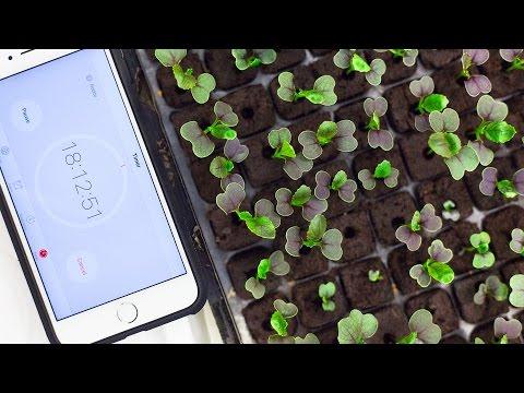 How long to keep lights on my seedlings