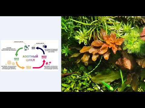 #Азотный цикл, #БИО баланс, #бактерии в аквариуме. Теория, практика применения и личный опыт.
