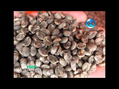 COFFEE FARMING - NAMOSI , FIJI