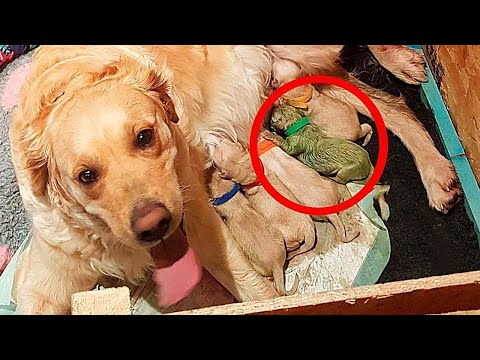 dog-gives-birth-to-the-rarest-puppy-in-the-world