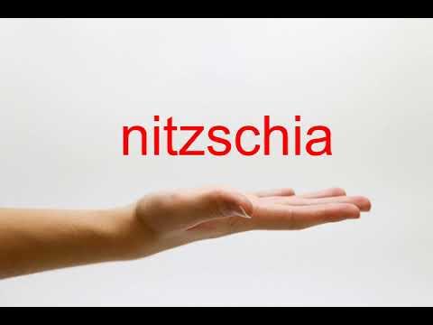 How to Pronounce nitzschia - American English
