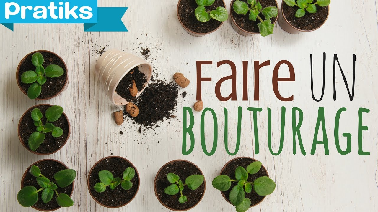Comment faire un bouturage ? - YouTube