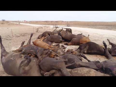 2017 Prairie Wildfires   FULL LENGTH