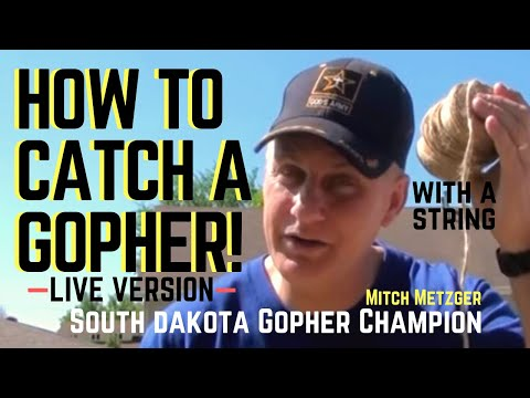 How To Catch Gopher Using Only String