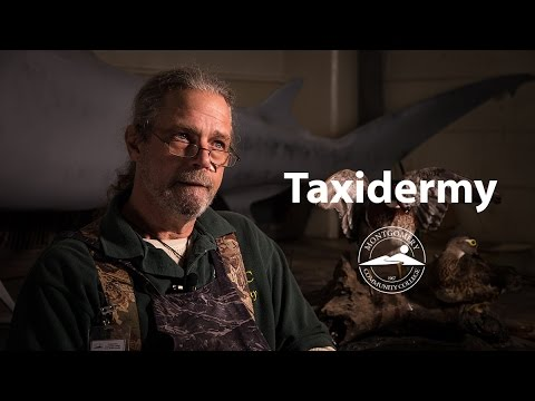 Taxidermy at Montgomery Community College