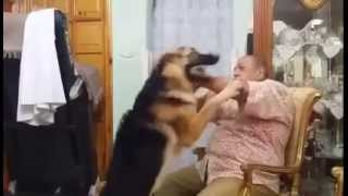 Egyptian Man Tells Dog They Can't Be Friends Anymore