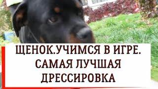 ЩЕНОК РОТВЕЙЛЕРА УЧИМСЯ В ИГРЕ дрессировка собаки
