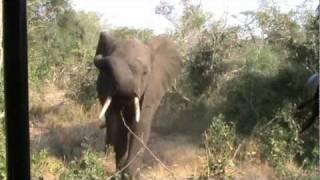 Elephant warnings