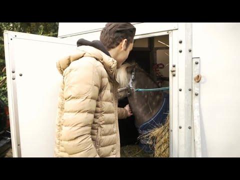 MY NEW HORSE ARRIVES|| MATT HARNACKE