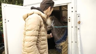 my-new-horse-arrives-matt-harnacke