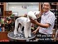 윤형석애견미용원 James' Dog grooming Salon Bedlington terrier