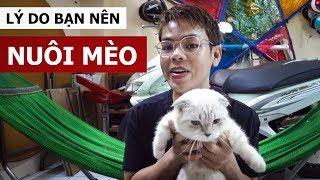 Lý do mà bạn nên nuôi mèo (Oops Banana Vlog #22)