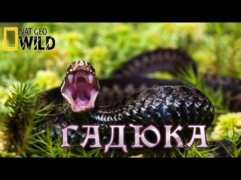Смертоносные змеи -