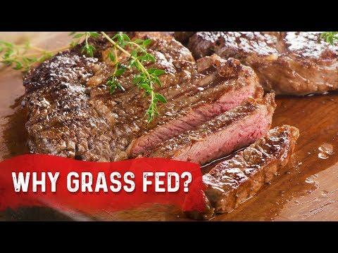 Why Grass Fed vs. Grain Fed - Dr.Berg