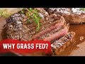 Why Grass Fed vs. Grain Fed
