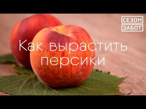 Вопрос: Где в Воронежской области растет костяника?