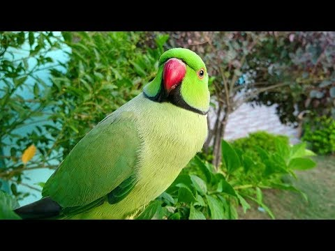 Parrot Calling All The Birds