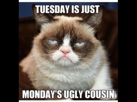 Monday Grumpy Cat Meme