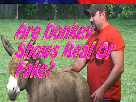 Are Donkey Shows Real? Or Fake? Find Out The Answer On The Pork Cave