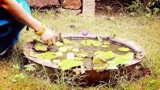 Shankara Nada Sareerapara sung by Deepika
