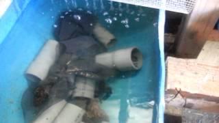 Crawfish Farming