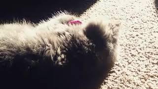 Our New Kitten!😻 thumbnail