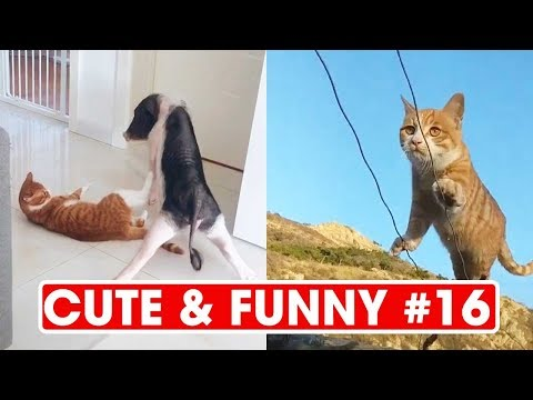 Cute & funny Dogs and Cats ♥ I Love Pets #16 #ilovepets