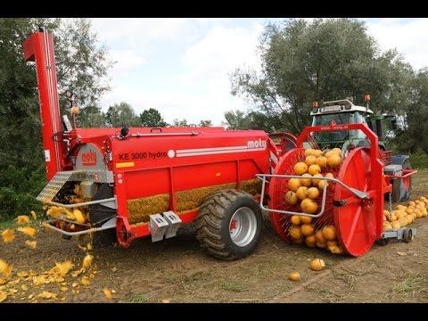 Hasil gambar untuk pumpkin seed harvester
