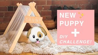 DIY CHALLENGE FOR THE NEW PUPPY!!