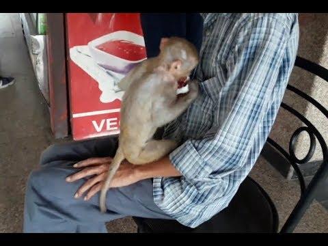 funny-monkey-dance-video-comedy-drama-in-india-2018-new-|-कॉमेडी-बन्दर-का-खेल,मदारी-2018-new