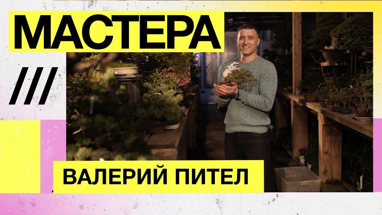 Валерий Пител, искусство бонсай — Мастера
