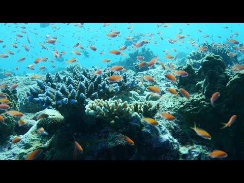 Palau music video 4K