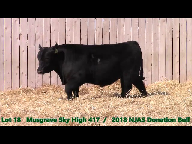 Musgrave Angus Lot 18