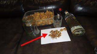 Перегородки грецкого ореха при диабете. Ореховые Створки для снижения сахара и лечения