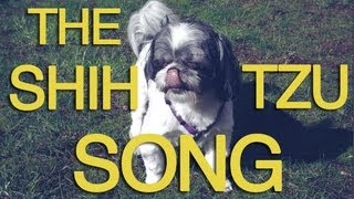 The Shih Tzu Song