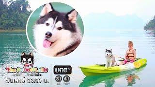 รายการ The Animal Lulla ช่อง one HD ES.55