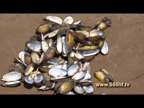 Сазан :: Статьи о рыбалке :: Рыбалка видео онлайн