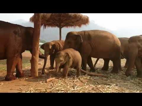Elephant Nature Park  Elephant Rescue Thailand