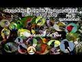 Suara Pikat Semua Jenis Burung Liar  Mp3 - Mp4 Download