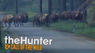 POBIŁEM REKORD! 20 BIZONÓW! (theHunter: Call of the Wild #17)