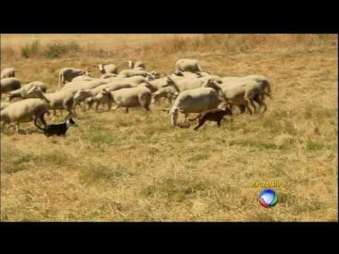 Serra Da Estrela: Saiba Como é Feito O Irresistível Queijo Português