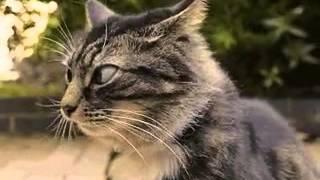 Кот чувствует где-то засаду!