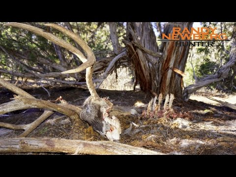 Hunting Colorado Mule Deer with Randy Newberg (FT S4 E2)