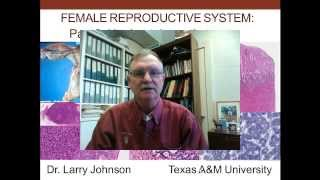 18. Medical School Histology. Female Reproductive System - Part 2 - Uterine Tube and Uterus