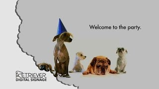 Digital Signage: Welcome To The Party Funny Dog Video