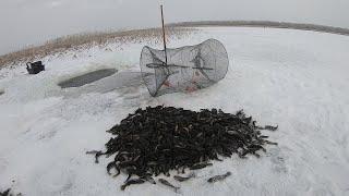 Рыбалка на Мордушку 2020 Ротан Гигант Вожак Стаи Был Пойман