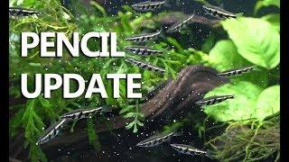 Crisis Averted? 75 Gallon South American Nano Community Update